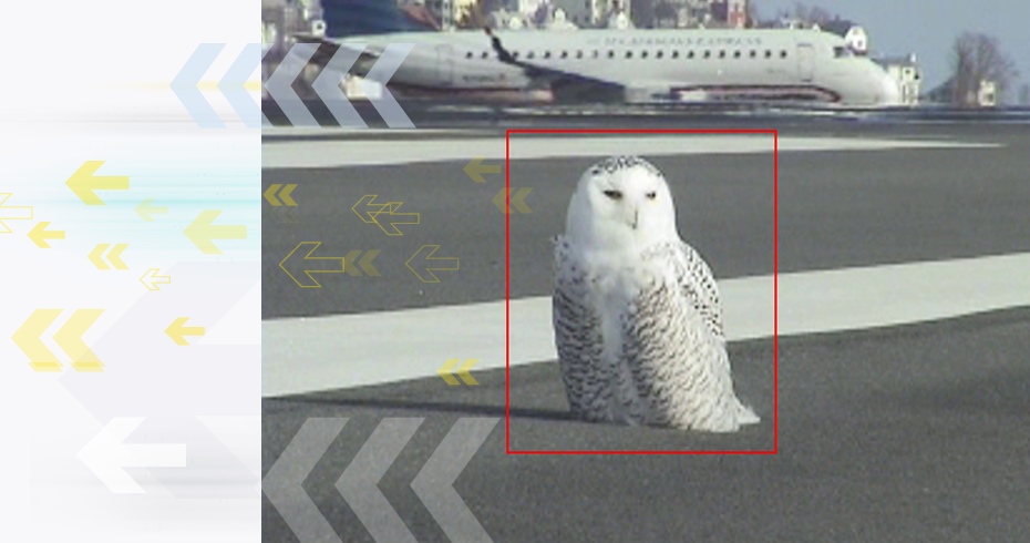 Owl detection